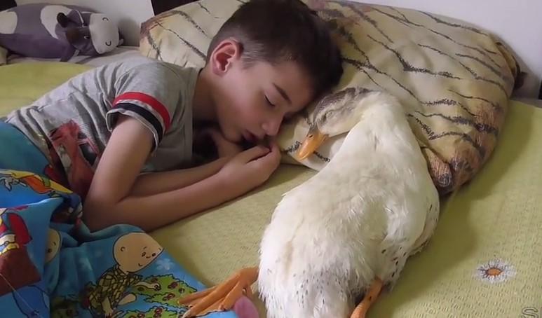 Полюбувайте се на зародилото се трогателно приятелство между малкото момче и домашната патица! Те са неразделни (ВИДЕО)