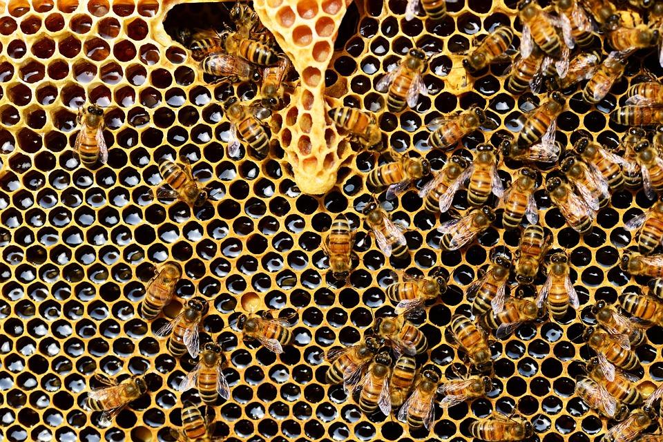 Важно за всички. Пчелите в България загиват! Пчеларите на бунт, искат от кабинета пълна забрана на…