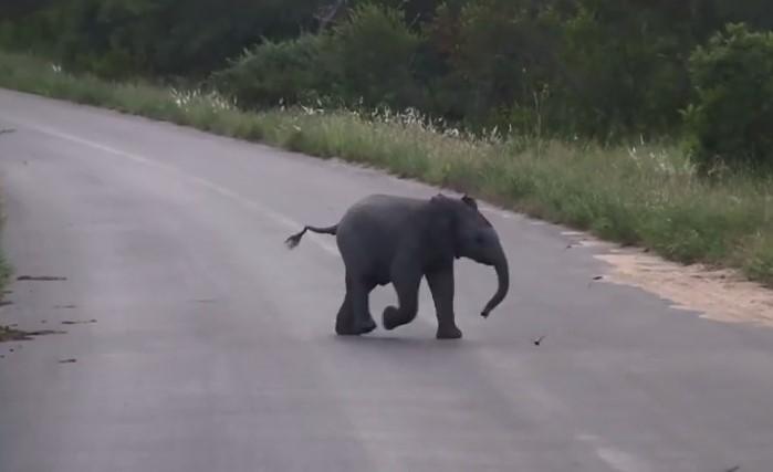 Такъв сладур не сте виждали! Страхотна реакция на малко слонче, което вижда ниско прелитащи птици (ВИДЕО)