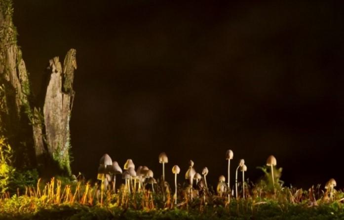 Специалисти от НАСА започнаха да събират гъби от забранената зона на Чернобил