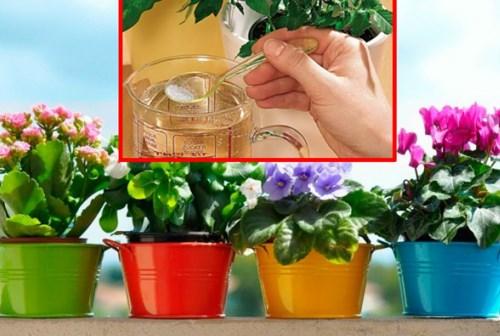 Домашните цветя ще се превърнат в буйна гора с тази проста съставка! Всички ще ви питат, какво толкова слагате