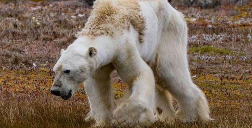 """Ето това ни причинява глобалното затопляне: """"Ние стояхме там и плачехме"""" (ВИДЕО)"""