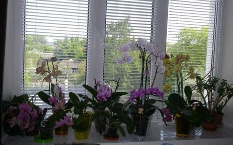 Ето как да спасите домашните си цветя, дори да изглеждат като умрели. С тази вода направо ще възкръснат, нужни са ви две важни съставки