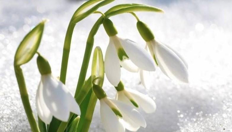 Дежурният синоптик Боряна Маркова отсече: Пролетните градуси си отиват, очаквайте рязка промяна във времето