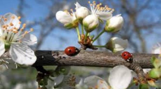 Пролетта е тук: Синоптиците обявиха дългосрочната си прогноза за април и разкриха какво време ни очаква за Великден