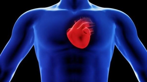 Тази теория на д-р Ризман за сърцето разтърси основите на научния свят. Какво не знаем за ключовия орган?