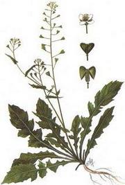 Как различните пролетни растения могат да ни помогнат, ако сме болни