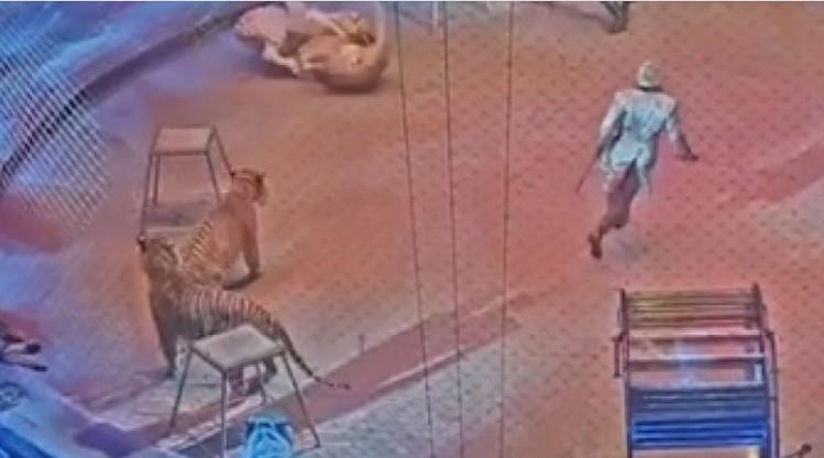 Страховито ВИДЕО 18+: Публиката дълго ще помни с ужас това, което се случи в Московския цирк