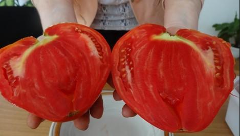 Терапия за доматите с йод и чесън: Това е начинът да опазим реколтата и да съберем очите на комшиите (СНИМКА)