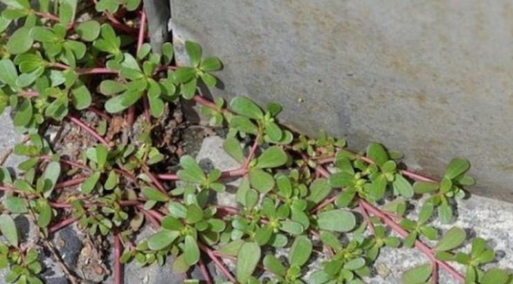Ако видите това растение в двора си, не го унищожавайте за нищо на света!