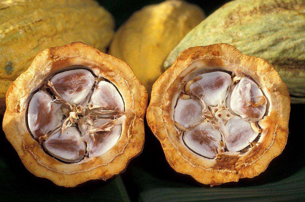 Защо топлото какао е супер напитка през зимния сезон?
