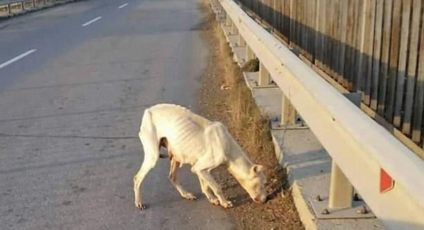 Млада жена от Пловдив събра последните си пари и пропътува 120 км, за да спаси изоставено куче (СНИМКИ)