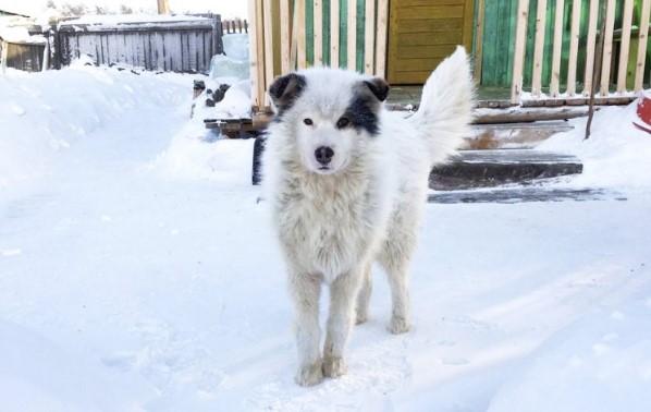 Помагайки на замръзнало в снега куче, хората с ужас видели какво крие под себе си