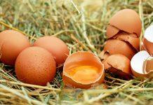 варенето на яйца