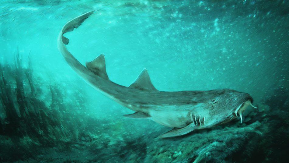 праисторическа акула