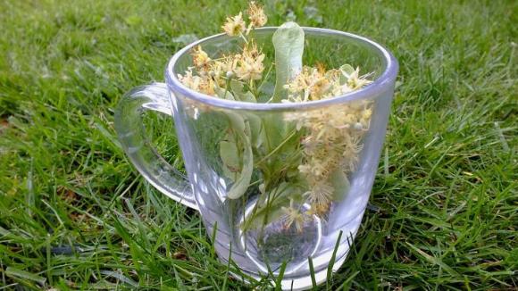 Защо е полезен уникалният липов чай?