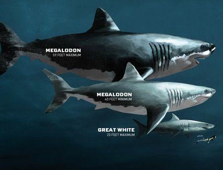Oгромна акула бе намерена с откъсната глава от по-голямо животно (Снимка)