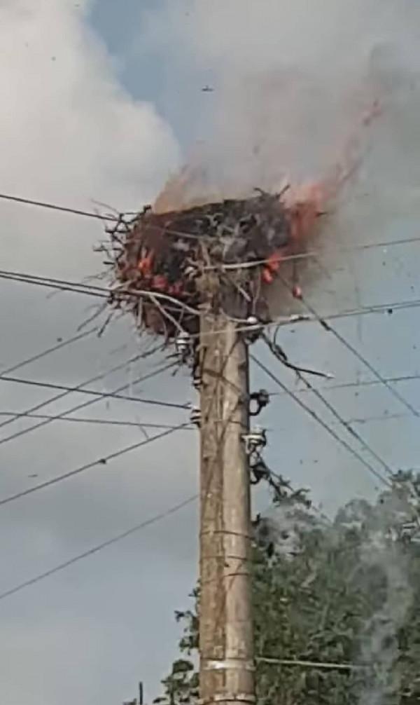Малки щъркелчета изгоряха живи в Гложене (Снимки)