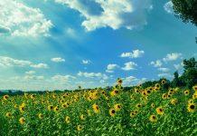 температури юли риск от градушки
