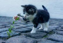 любители на котките
