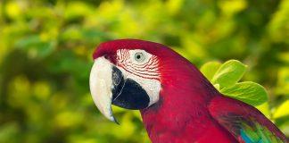 виц на деня папагал