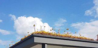 холандия пчели