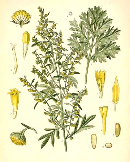 3 растения ни помагат срещу кърлежи, мухи и бълхи