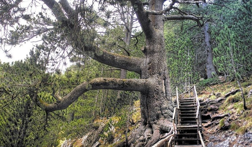 Удивителните растения в България