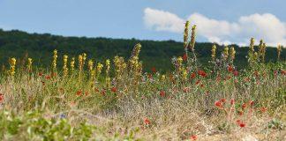 растения в България