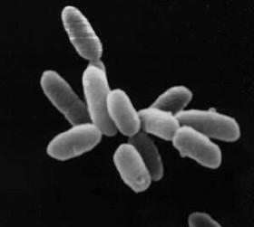 Побитите камъни – построени от бактерии по сантиметър на 350 години