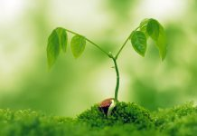 растения насекоми