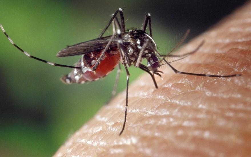 ухапвания от комари