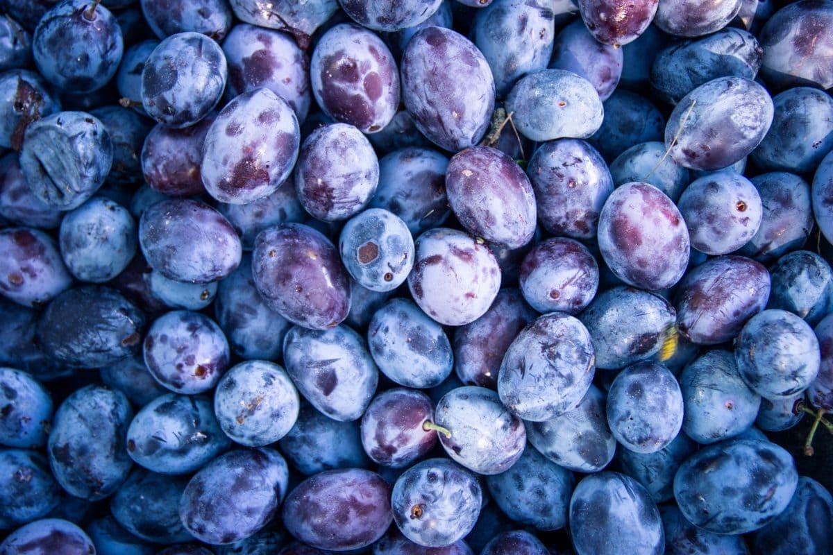 Как да си направим компот от сини сливи?
