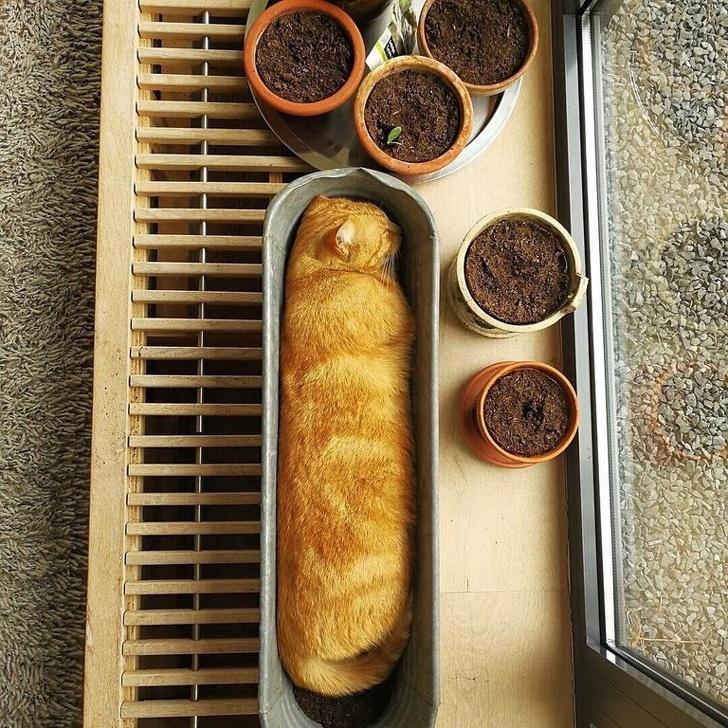 21 забавни снимки на спящи котки, които ще ви накарат да се усмихнете