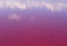 българското Червено море
