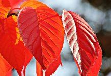 температури през ноември