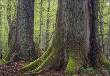 старите гори