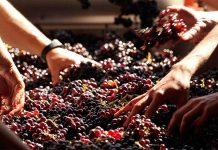 Наръчник лозаро-винарски практики