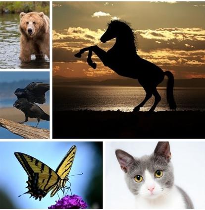 Адски точен тест: Изберете животно и се опознайте (Снимка)