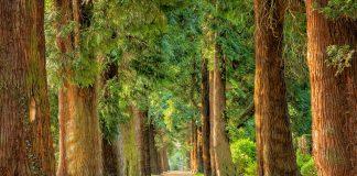 изберете дърво