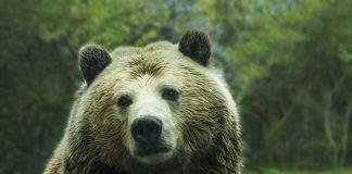 мечката