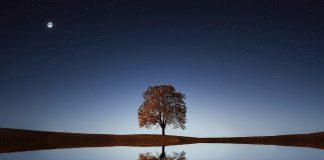 нещастното дърво
