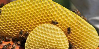 пчелния восък