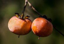 райската ябълка