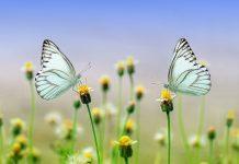 трите пеперуди