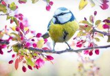 каква пролет ни чака