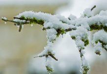 снеговалежи