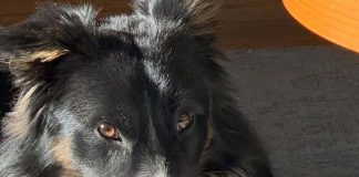 Прокопиев куче