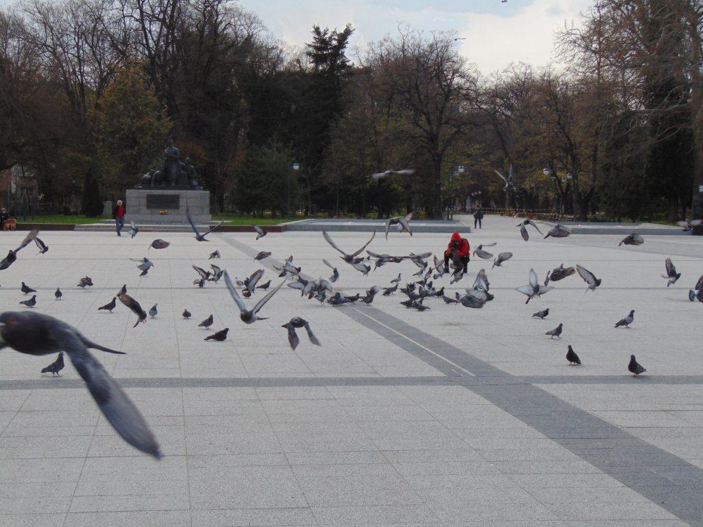 Глоби за 4 млн. лв. за разходки в паркове и градини до момента (СНИМКИ)