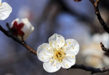 Пролетта се завръща